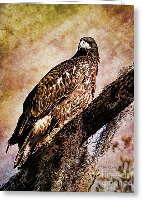 Young Eagle Pose II Greeting Card by Deborah Benoit