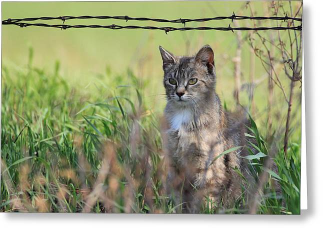 Young Farm Kitty Greeting Card