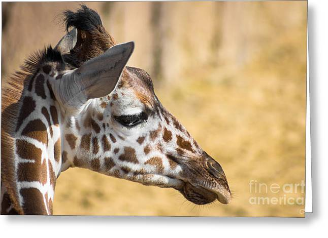 Young Giraffe Greeting Card