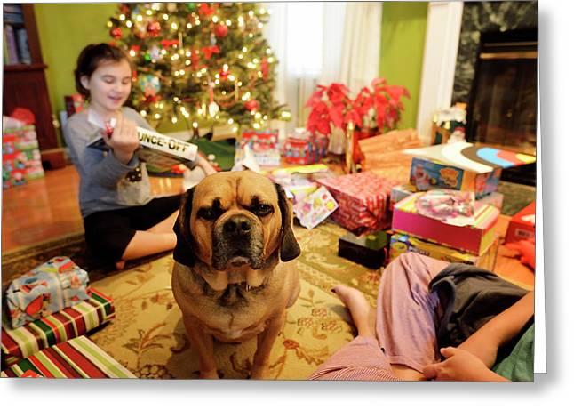 Young Girl And Dog On Christmas Morning Greeting Card