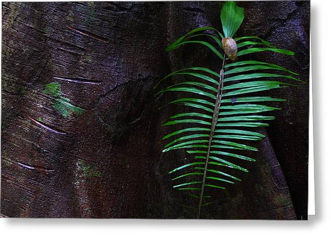 Palm Leaf Against Tree Greeting Card