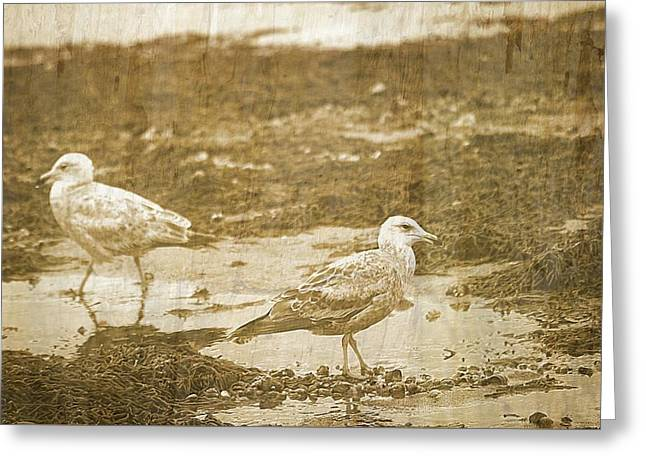 Young Seagulls On Harwich Cape Cod Beach Greeting Card by Suzanne Powers
