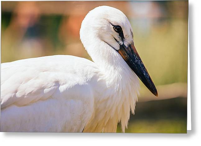 Young Stork Portrait Greeting Card by Pati Photography