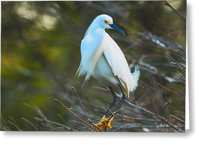 Your Nest Or Mine Greeting Card by Christina Manassa