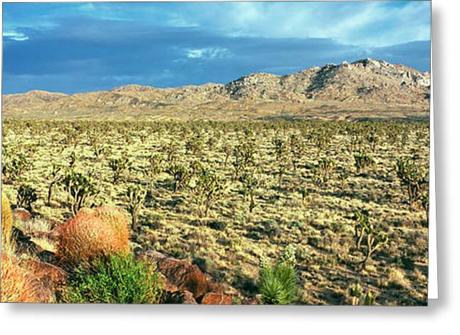 Yucca And Joshua Trees In A Desert Greeting Card
