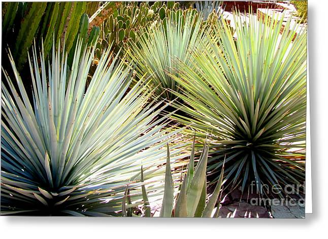 Yucca Explosion Greeting Card by Marilyn Smith