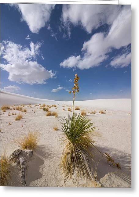 Yucca Growing On Dune In White Sands N Greeting Card by