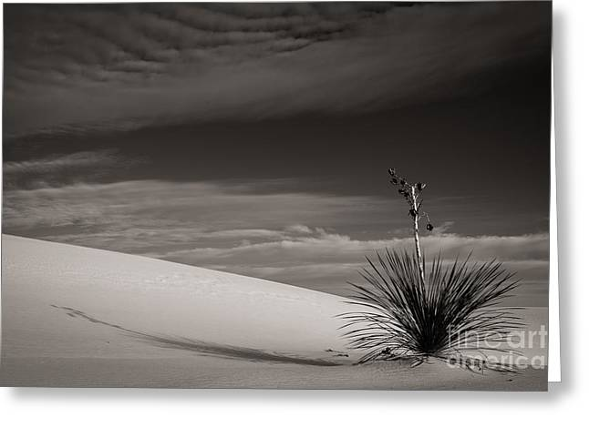 Yucca In The Sandsiii Greeting Card