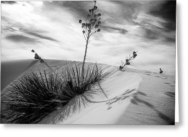 Yucca In White Sand Greeting Card