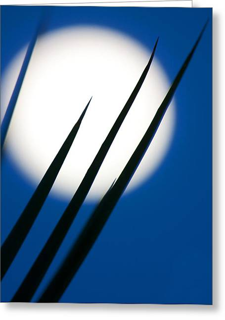 Greeting Card featuring the photograph Yucca Moon by Jim Garrison