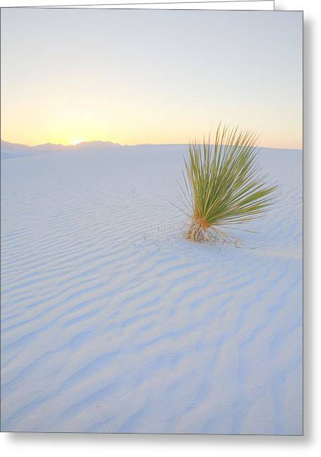 Greeting Card featuring the photograph Yucca Plant At White Sands by Alan Vance Ley