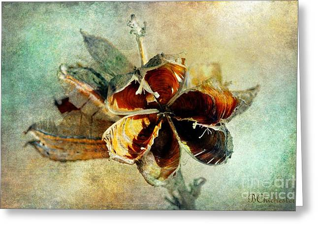 Yucca Pod - Barbara Chichester Greeting Card by Barbara Chichester