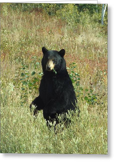 Yukon Black Bear Greeting Card