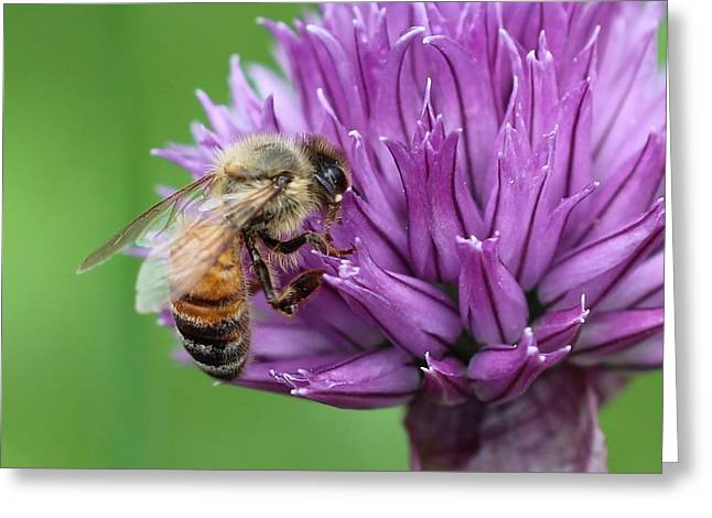 Yummm Chive Nectar Greeting Card