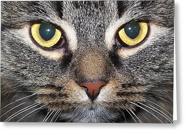 Yummy Cat Eyes Greeting Card