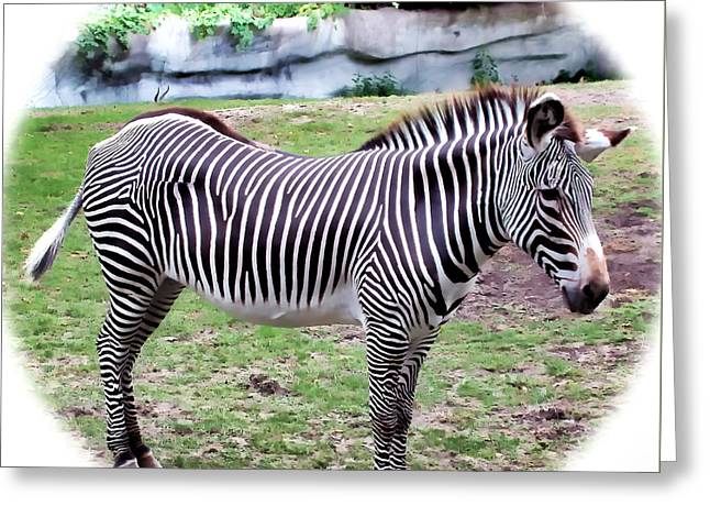 Greeting Card featuring the photograph Zebra 1 by Dawn Eshelman