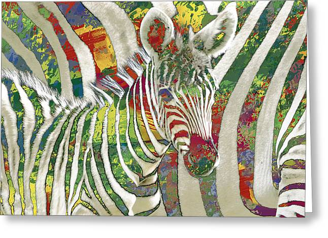 Zebra Art - 3 Stylised Drawing Art Poster Greeting Card by Kim Wang