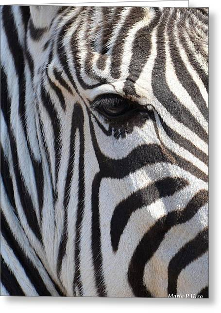 Zebra Eye Abstract Greeting Card by Maria Urso