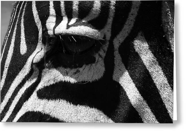 Zebra Eye Greeting Card by Aidan Moran