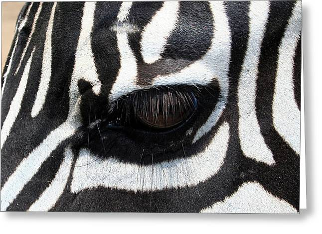 Zebra Eye Greeting Card by Linda Sannuti