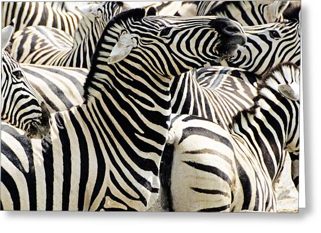 Greeting Card featuring the photograph Zebra Gathering by Dennis Cox WorldViews