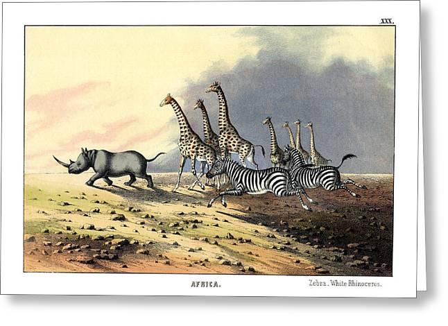 Zebra Giraffe White Rhinoceros Greeting Card by Splendid Art Prints