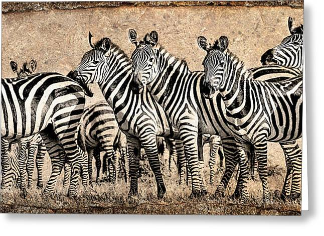 Greeting Card featuring the photograph Zebra Herd Rock Texture Blend by Mike Gaudaur