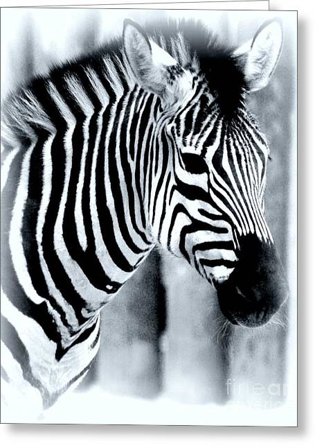 Zebra Greeting Card by Kathleen Struckle