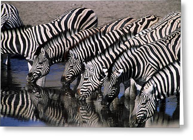 Zebra Line Greeting Card by Stefan Carpenter