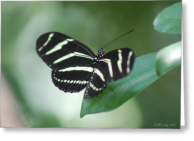 Zebra Longwing Butterfly A Quite Moment Greeting Card