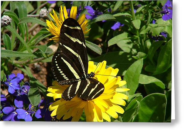 Zebra Longwing On Yellow With Purple Flowers - 103 Greeting Card