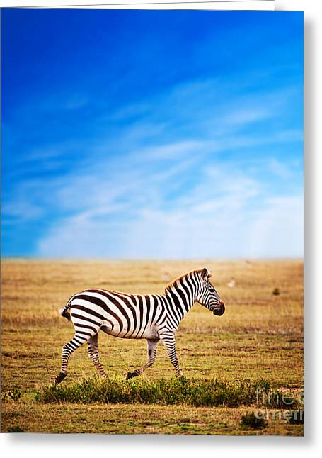 Zebra On African Savanna. Greeting Card by Michal Bednarek