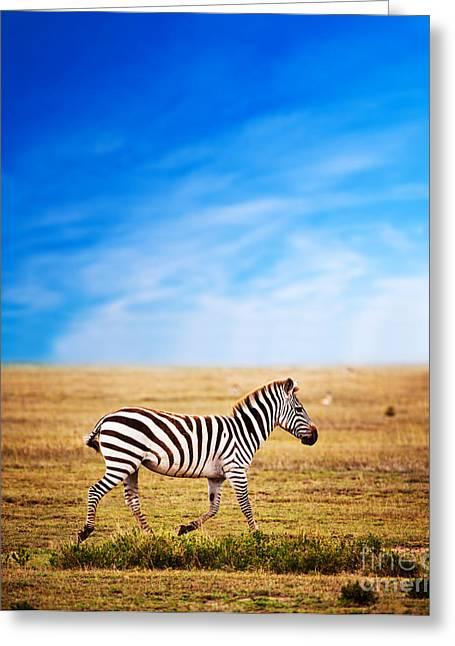 Zebra On African Savanna. Greeting Card by Michal Bednarek