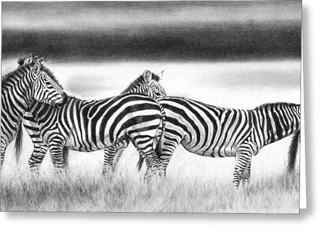 Zebra Panarama Greeting Card