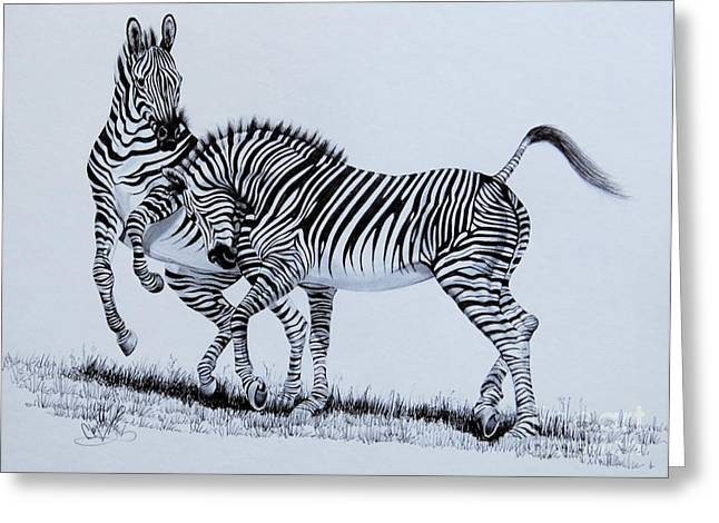 Zebra Play Greeting Card
