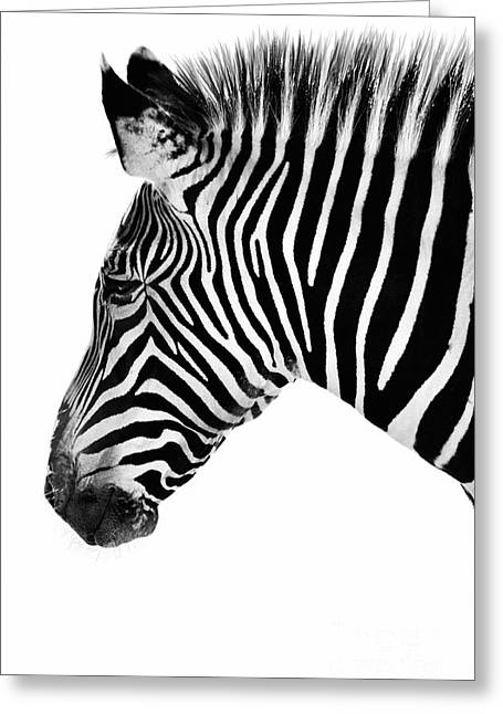 Zebra Profile Black And White Greeting Card