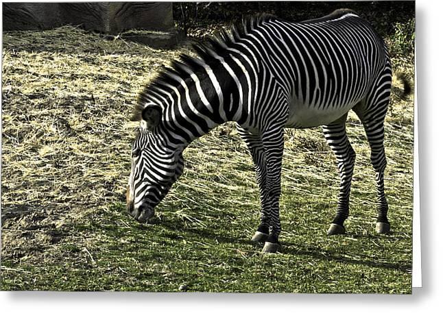 Zebra Striped Fourlegger Greeting Card by LeeAnn McLaneGoetz McLaneGoetzStudioLLCcom