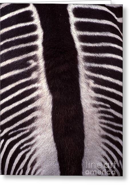 Zebra Stripes Closeup Greeting Card by Anna Lisa Yoder