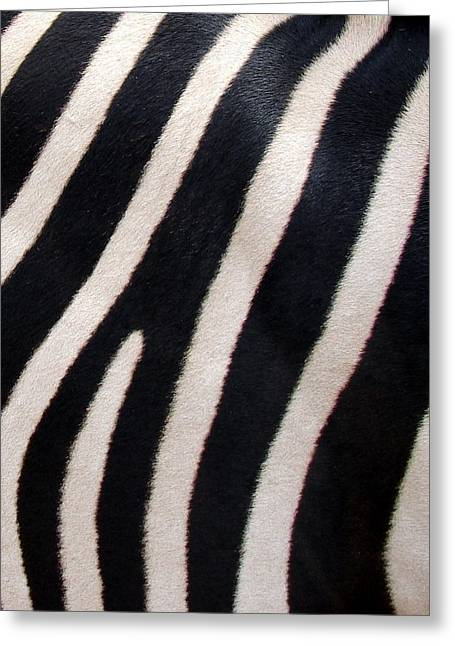 Greeting Card featuring the photograph Zebra Stripes by Ramona Johnston