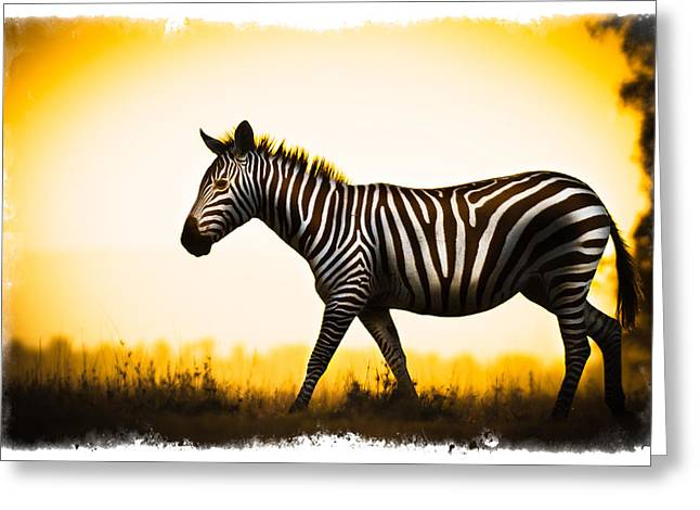 Greeting Card featuring the photograph Zebra Sunset by Mike Gaudaur