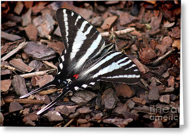 Zebra Swallowtail Butterfly Greeting Card