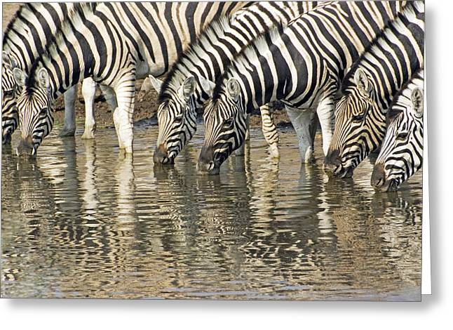 Greeting Card featuring the photograph Zebras At Water Hole by Dennis Cox WorldViews