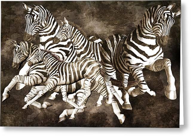 Zebras Greeting Card by Betsy Knapp