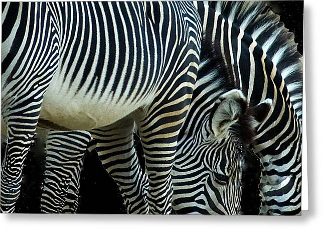 Greeting Card featuring the photograph Zebras by Mae Wertz