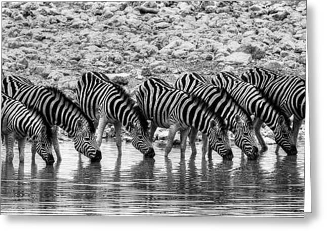 Greeting Card featuring the photograph Zebras On A Waterhole by Juergen Klust