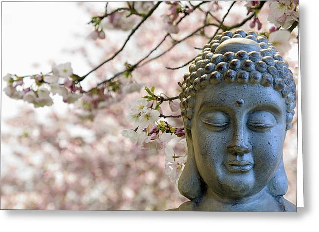 Zen Buddha Meditating Under Cherry Blossom Trees Greeting Card