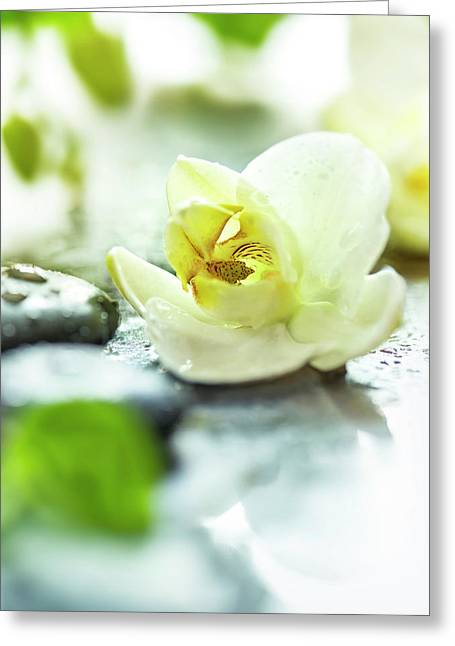 Zen Orchid Greeting Card