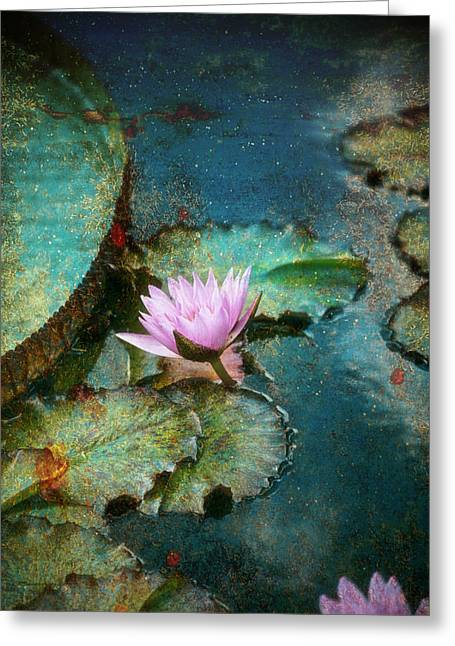 Zen Water Lily Greeting Card