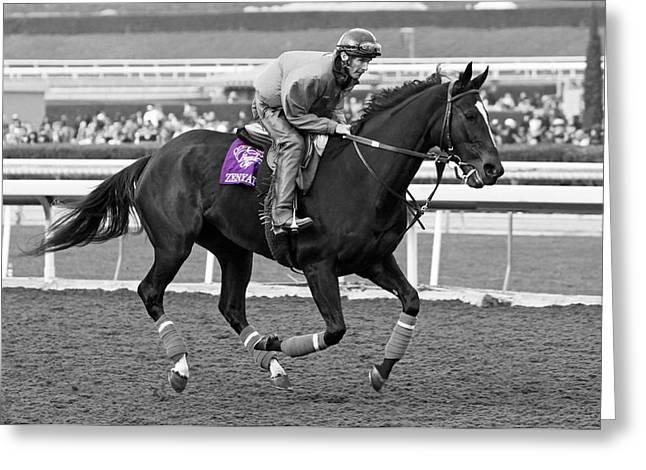 Zenyatta Parades For Fans Greeting Card by Cheryl Ann Quigley