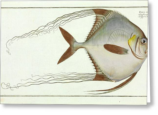 Zeus Ciliaris (alectis Ciliaris) Greeting Card by Natural History Museum, London